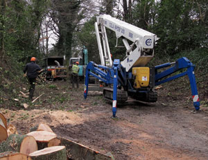 tree surgery, crown thinning, pollarding, stump removal, Ireland
